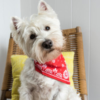 Rex: Red Paisley - Large Dog Bandana