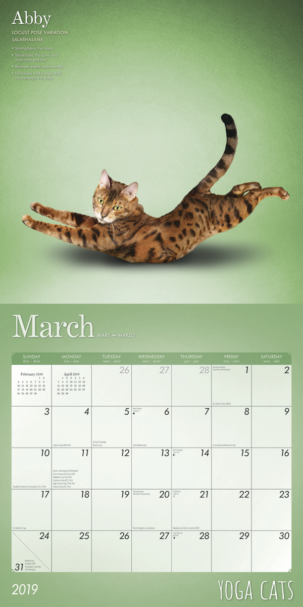 Yoga Cats 2019 Square Wall Calendar by Inc Browntrout Publishers image