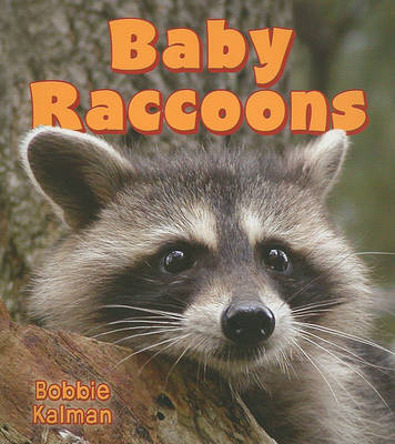Baby Raccoons by Bobbie Kalman image
