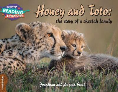 Honey and Toto: The Story of a Cheetah Family 1 Pathfinders by Jonathan Scott