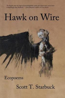 Hawk on Wire by Scott T Starbuck