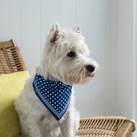 Rex: Blue Polka - Large Dog Bandana