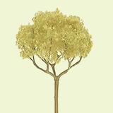 "JTT Basswood Round Head Trees 2.5"" (3pk) - H0 Scale"