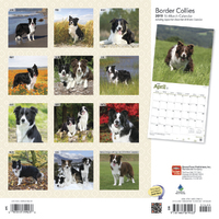 Border Collies 2019 Square Wall Calendar by Inc Browntrout Publishers image