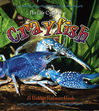 The Life Cycle of a Crayfish by Bobbie Kalman