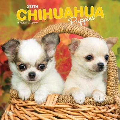 Chihuahua Puppies 2019 Square Wall Calendar by Inc Browntrout Publishers image