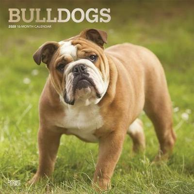 Bulldogs 2020 Square Foil Wall Calendar