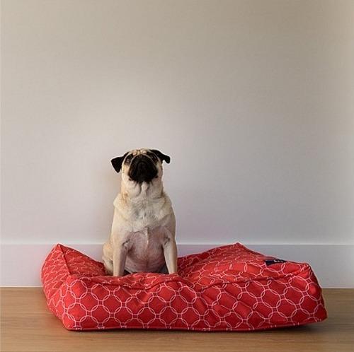 Buddy Cushion Medium image