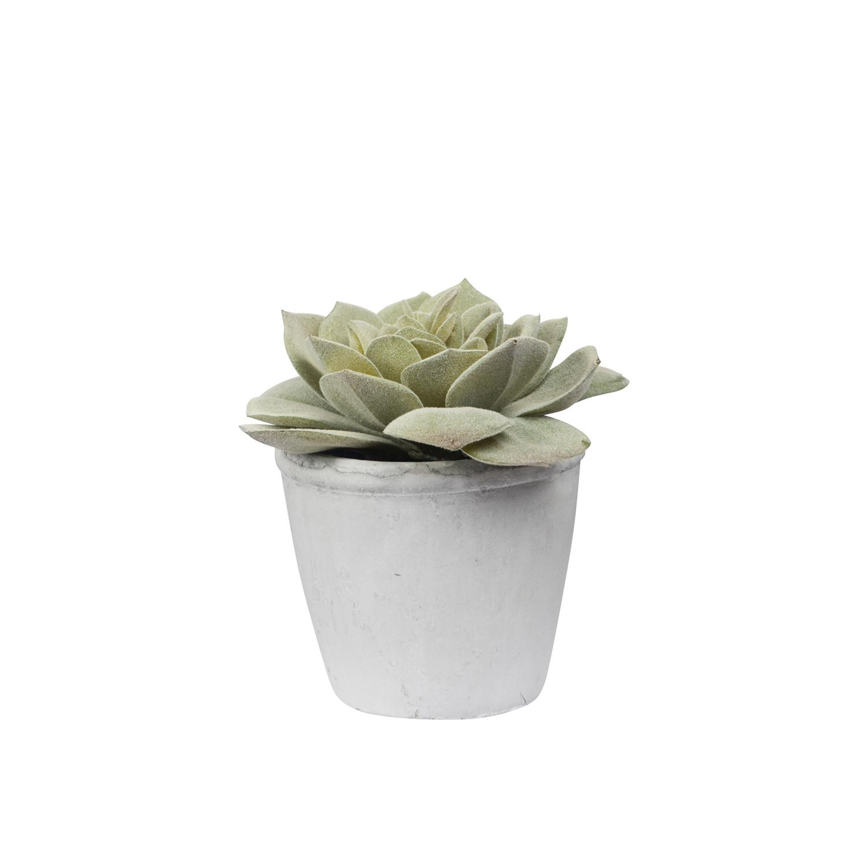 General Eclectic: Artificial Plant - Echeveria Succulent image