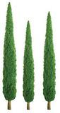 "JTT Scenic Poplar Trees 6"" (2pk) - H0 Scale"