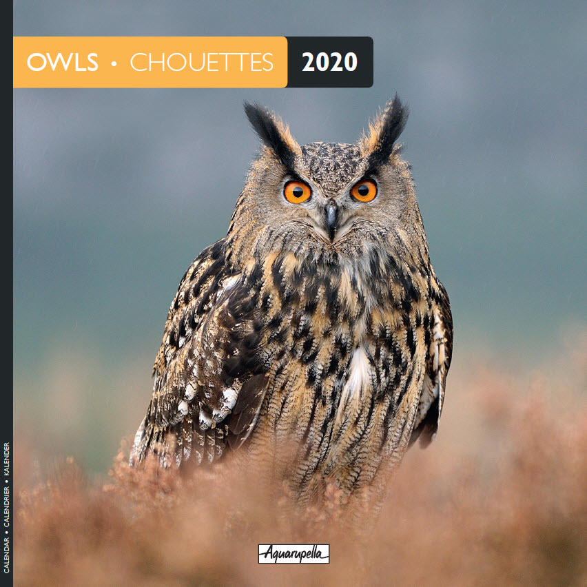 Aquarupella: 2020 Wall Calendar - Owls image