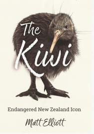 The Kiwi: Endangered New Zealand Icon