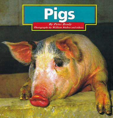 Pigs by Peter Brady