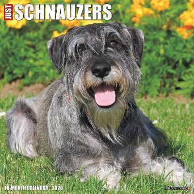 Just Schnauzers 2020 Wall Calendar (Dog Breed Calendar) by Willow Creek Press