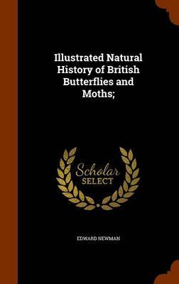 Illustrated Natural History of British Butterflies and Moths; by Edward Newman image