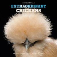 Extraordinary Chickens 2019 Wall Calendar by Stephen Green-Armytage