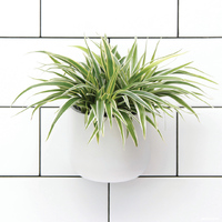 Okidome Suction Planter - White