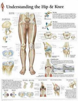 Understanding Hip and Knee