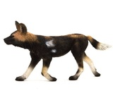 Animal Planet African Painted Dog