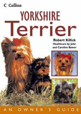 Yorkshire Terrier by Robert Killick image