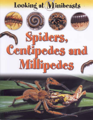 Spiders, Centipedes and Millipedes by Sally Morgan