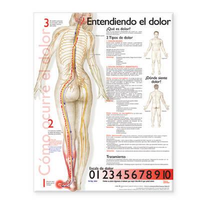 Understanding Pain Anatomical Chart in Spanish image