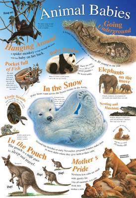 Animal Babies image