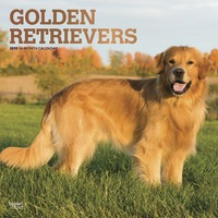 Golden Retrievers 2019 Square Wall Calendar by Inc Browntrout Publishers