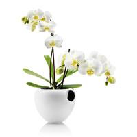 Eva Solo: Orchid Pot Self-Watering Pot