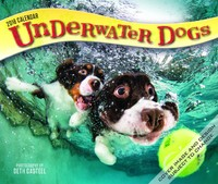 Underwater Dogs 2018 Box Calendar by Inc Browntrout Publishers