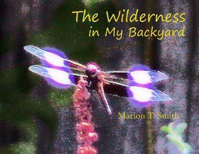 The Wilderness in My Backyard by Marion T Smith