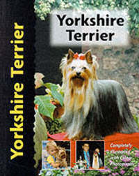 Yorkshire Terrier by Rachel Keyes