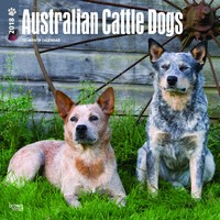 Australian Cattle Dogs 2018 Square Wall Calendar