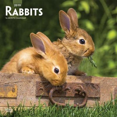 Rabbits 2019 Square Wall Calendar by Inc Browntrout Publishers