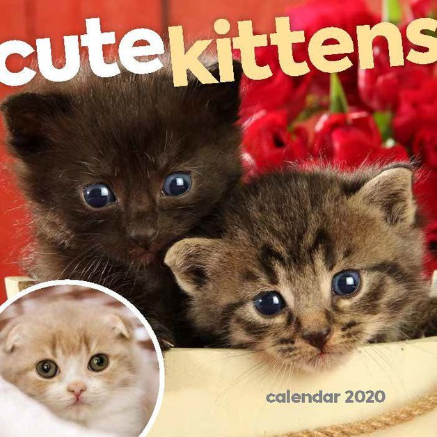 Cute Kittens 2020 Mini Wall Calendar