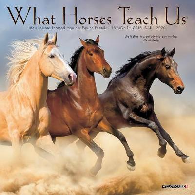 What Horses Teach Us 2020 Mini Wall Calendar by Willow Creek Press