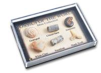 Mini Fossil Chart Box