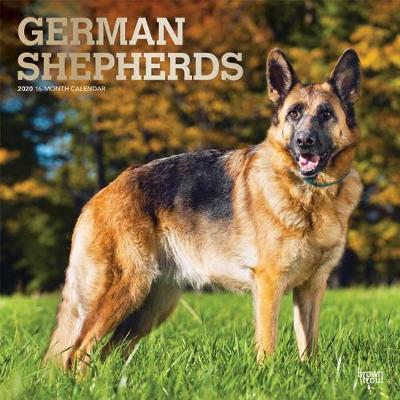 German Shepherds 2020 Square Foil Wall Calendar