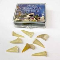 Fossilised Sharks Teeth