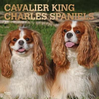 Cavalier King Charles Spaniels 2019 Square Wall Calendar by Inc Browntrout Publishers image
