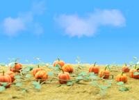 "35mm (1-3/8"") Pumpkins (HO Scale) 6 Pack"