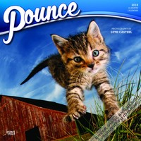 Pounce 2018 Square Wall Calendar by Inc Browntrout Publishers