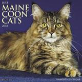 Just Maine Coon Cats 2018 Wall Calendar by Willow Creek Press