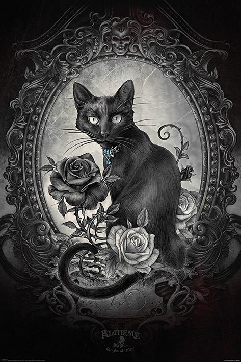 Alchemy (Paracelcus) Black Cat (719)