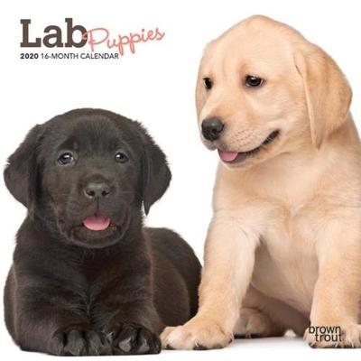 Lab Puppies 2020 Mini Wall Calendar