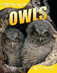 Owls by Sally Morgan image