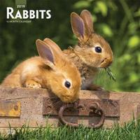 Rabbits 2019 Square Wall Calendar by Inc Browntrout Publishers image