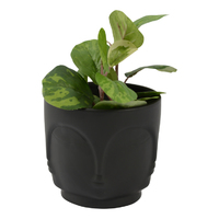 Nomad Pot (Medium) - Black