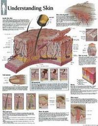 Understanding Skin image
