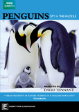 Penguins: Spy in the Huddle DVD
